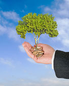 Palm with a tree growng from pile of coins — Stockfoto