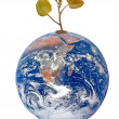 Stock Photo: Planet earth as symbol of nature conservation.Elements of this i