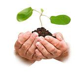 Handen met plantgoed — Stockfoto