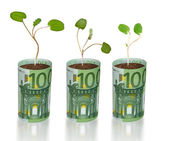Sapling growing from euro — Stock Photo