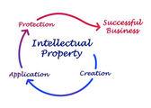 Intellectual property diagram — Stock Photo