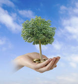 Tree growng from pile of coins — Stock Photo