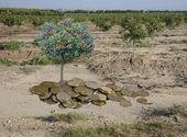 árbol de cítrico de monedas — Foto de Stock