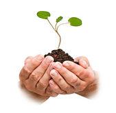 Drzewko w ręce — Zdjęcie stockowe