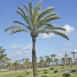 Palm trees in Netanya parl - Stock Photo