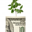 Sapling growing from dollar bill — Zdjęcie stockowe