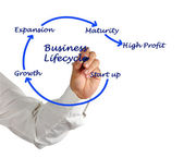 Business lifecycle — Stock Photo