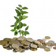 Stock Photo: Sapling growing from coins