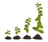 Bitkiler toprak — Stok fotoğraf