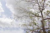 Tree at spring — Stock Photo