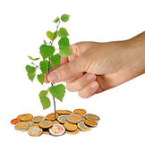 Investment to green business — Stock Photo