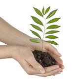 Plantgoed in handen — Stockfoto