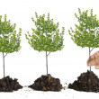 Planting tree — Stock Photo #26818951