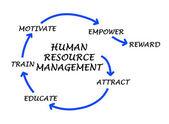 人的資源管理 — ストック写真