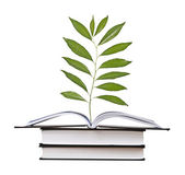 Sapling growing from book — Stock Photo