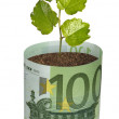 Sapling growing from euro bill — Stock Photo