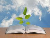 Eucalyptus tree growing from open book — Stock Photo