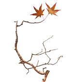 Dry branch — Stock Photo
