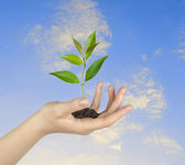 Sapling in hand — Stock Photo