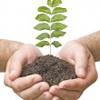 Stock Photo: Sapling in hands