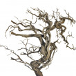 Dry branch — Stock Photo