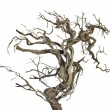 Stock Photo: Dry branch