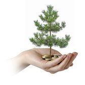 ヤシのコインの山から松の木 growng — ストック写真