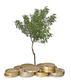 Tree growing from pile of coins — Stockfoto