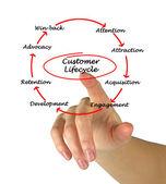 Customer Life Cycle — Stock Photo