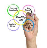Diagrama de vida sana — Foto de Stock