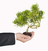 La planta en manos — Foto de Stock