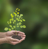 Sapling in hands — Foto Stock