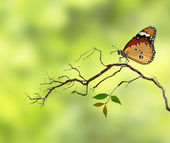 Butterflay — Stock Photo