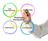 Business ownership — Stockfoto