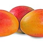 Mangoes isolated on white background — Stock Photo #6626882