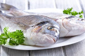 生の魚 — ストック写真