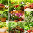 Garden collage - Stock Photo