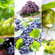 Grape collage — Stock Photo