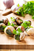 Escargots with parsley — Foto de Stock