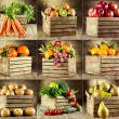 Collage of various fruits and vegetables — Stock Photo