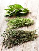 различные травы — Стоковое фото