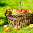 Red apples — Stock Photo #44736037