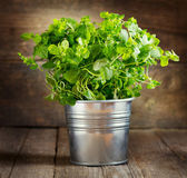 Fresh oregano — Stock Photo