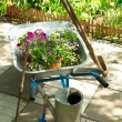 Wheelbarrow with flowers and garden tools — Stock Photo