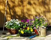 Letní květiny — Stock fotografie
