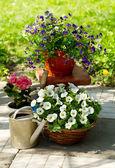 Letní květy v zahradě — Stock fotografie