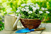 Flowers with garden tools — Stock Photo