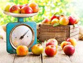 Manzanas frescas — Foto de Stock