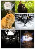 Cat collage — Stock Photo