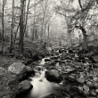 Stock Photo: Black and white cold stream